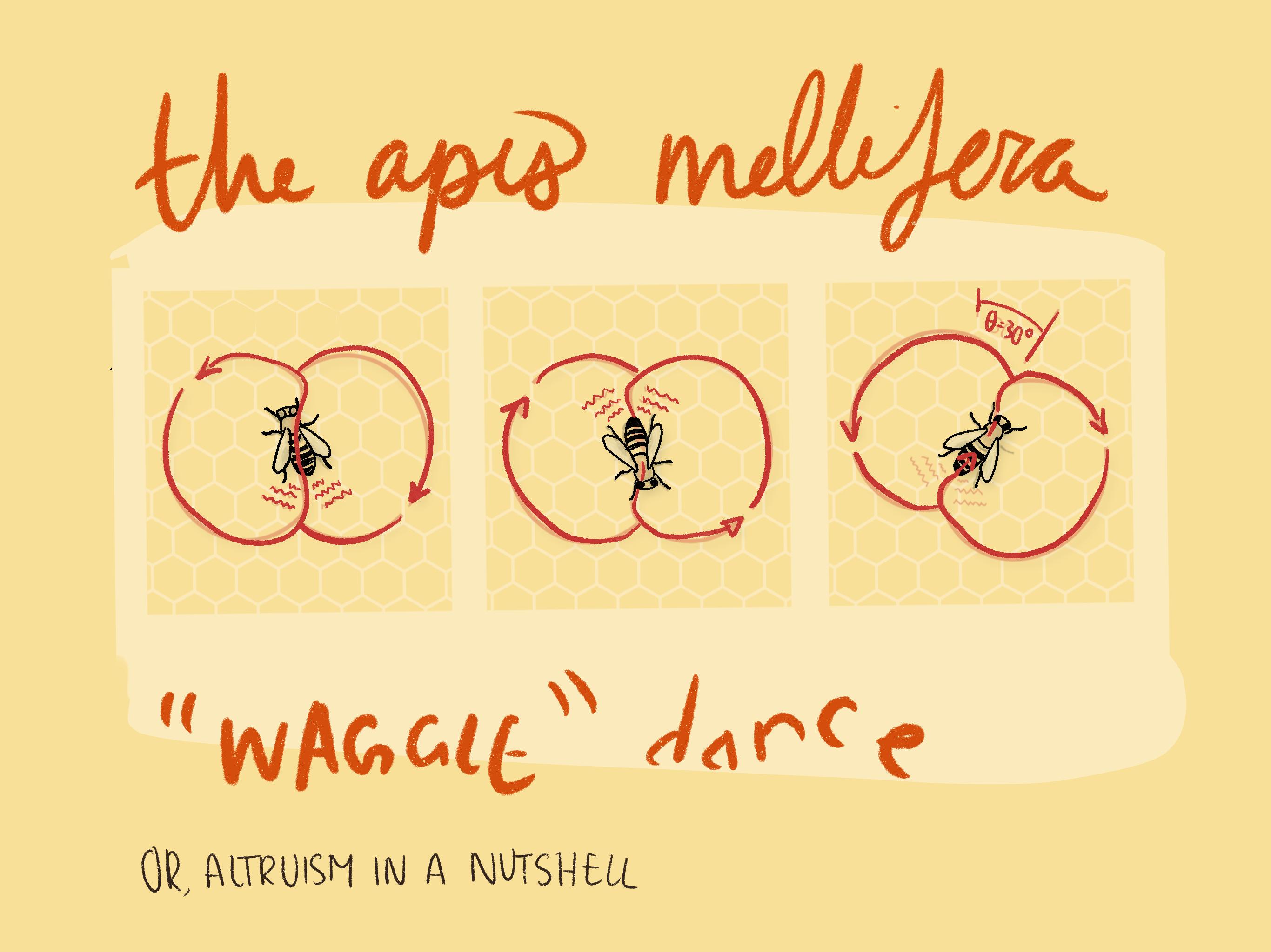 https://cloud-7kb8q7efb.vercel.app/0apis-melliflora-waggle-dance.png